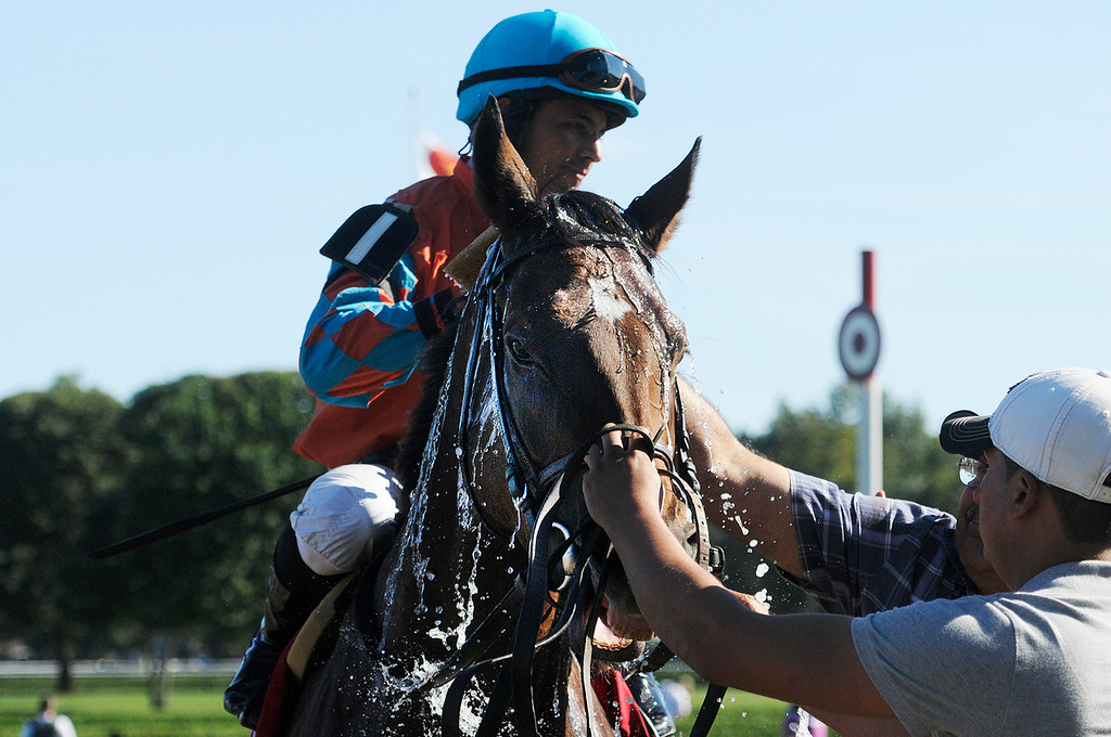 . With a short lead, Laughing ridden by Jose Lezcano won The 25th Running of The Ketel One Ballston Spa Stakes at the Saratoga Race Course on the inner turf Saturday.Photo Erica Miller/The Saratogian 8/24/13 BallstonSpaEM2