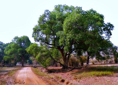 Deccan Plains and Jungle Flora