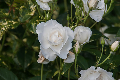 Lancaster Garden Club Marcinczyk/ Watson Flower Tour