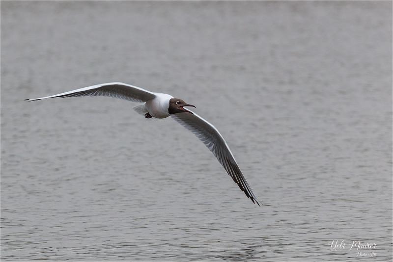 2018-05-02 BirdLife Neeracherried 0U5A8841.jpg