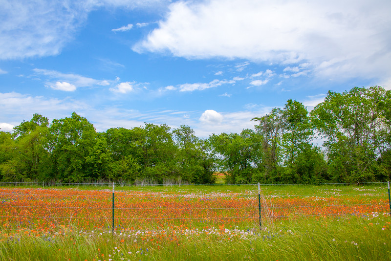 2016_4_9 Texas Wildflower Shoot-8512.jpg