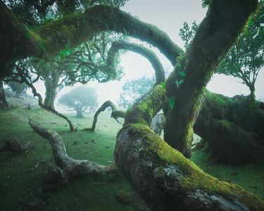 Madeira Green