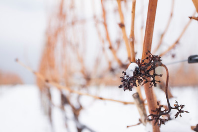 Winter/Icewine