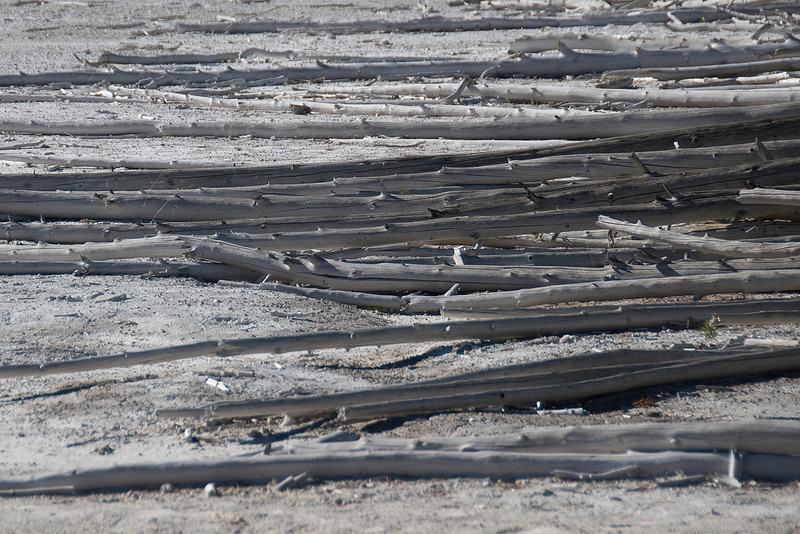 Dead branches at Yellowstone National Park