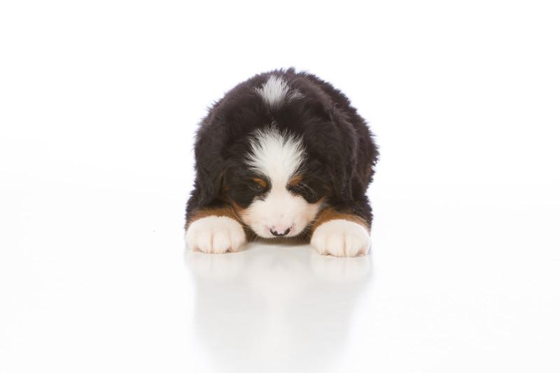 2013-Pearson Pups-Jun02-0283.jpg
