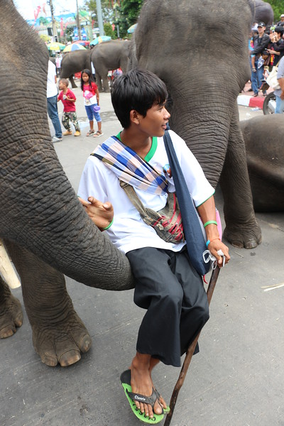 2014-11-14 Surin Elephant Welcome Feast 695.JPG