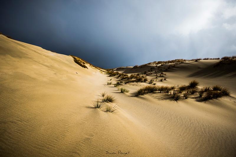 Stewart Island dune.jpg