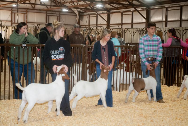 kay_county_showdown_goats_20191207-74.jpg