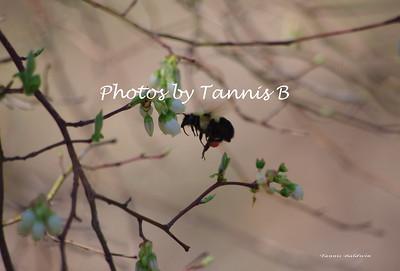 Flowers & Bees 2012
