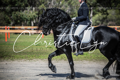 Friesian Keuring April 4th 2017