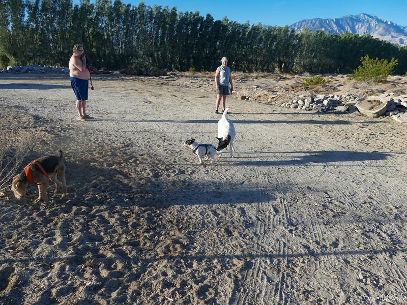 dog walk in the desert (10 of 13).jpg
