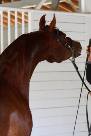 Hillcrest Equestrian Center