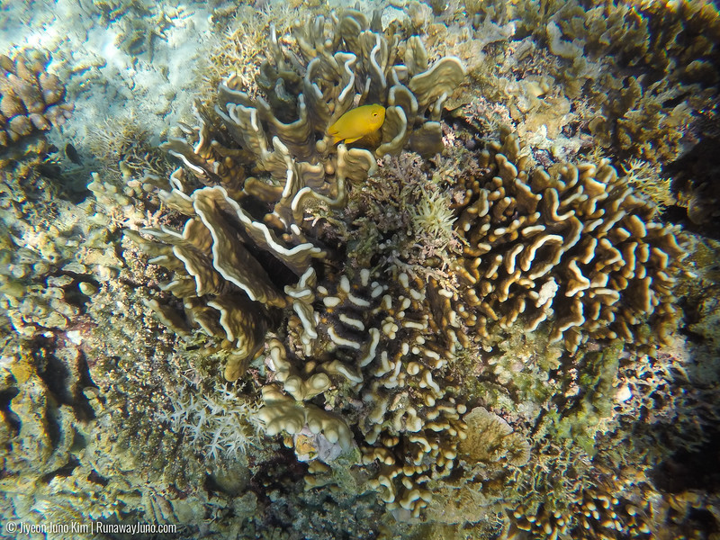 Flores Island snorkeling