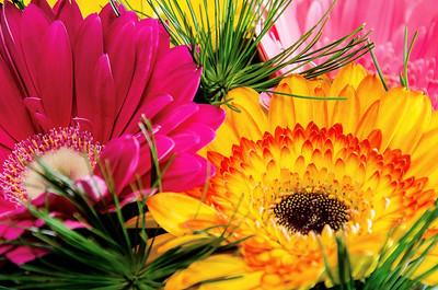 Smart-Flores