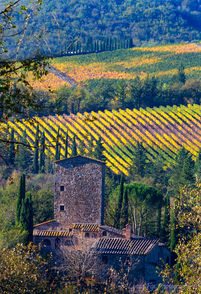 Old Building Among Vineyards