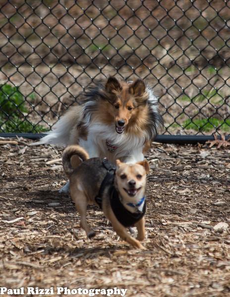 DogPark-9617.jpg