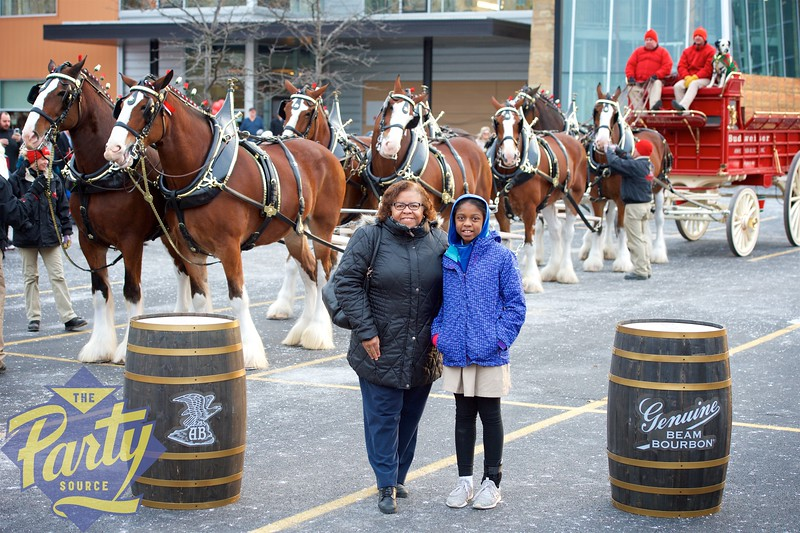 Clydesdale Portraits 80.jpg