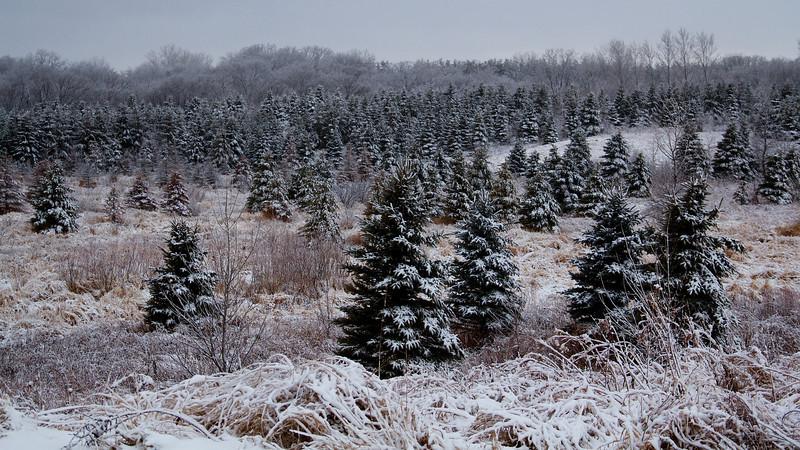 Snow Day 003.jpg
