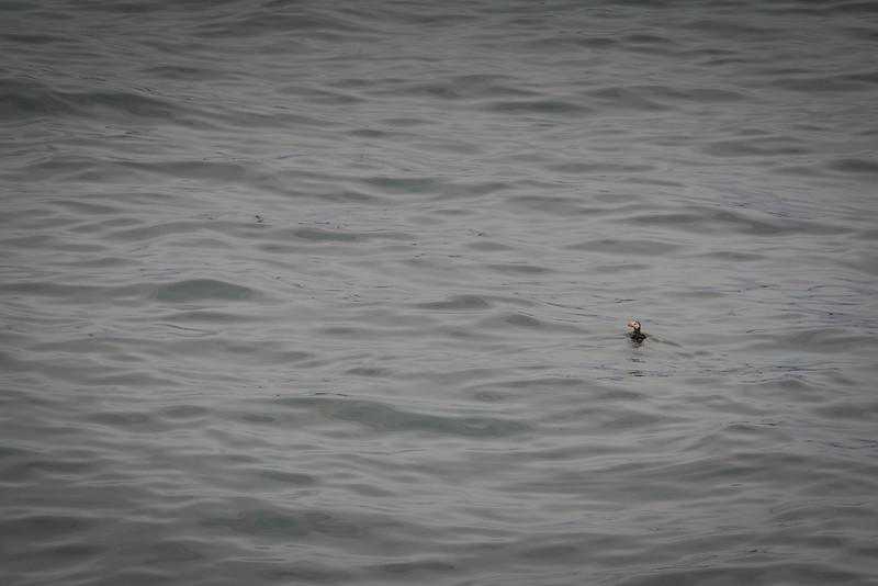 Kenai-Fjords-178.jpg