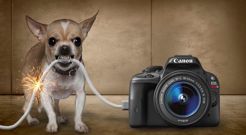 danger-dog.jpg
