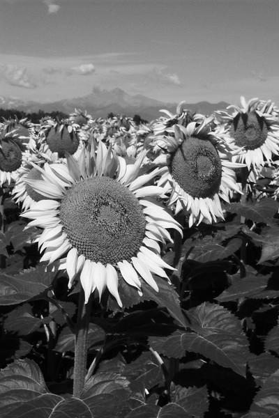 amh FLOWERS (1860).jpg