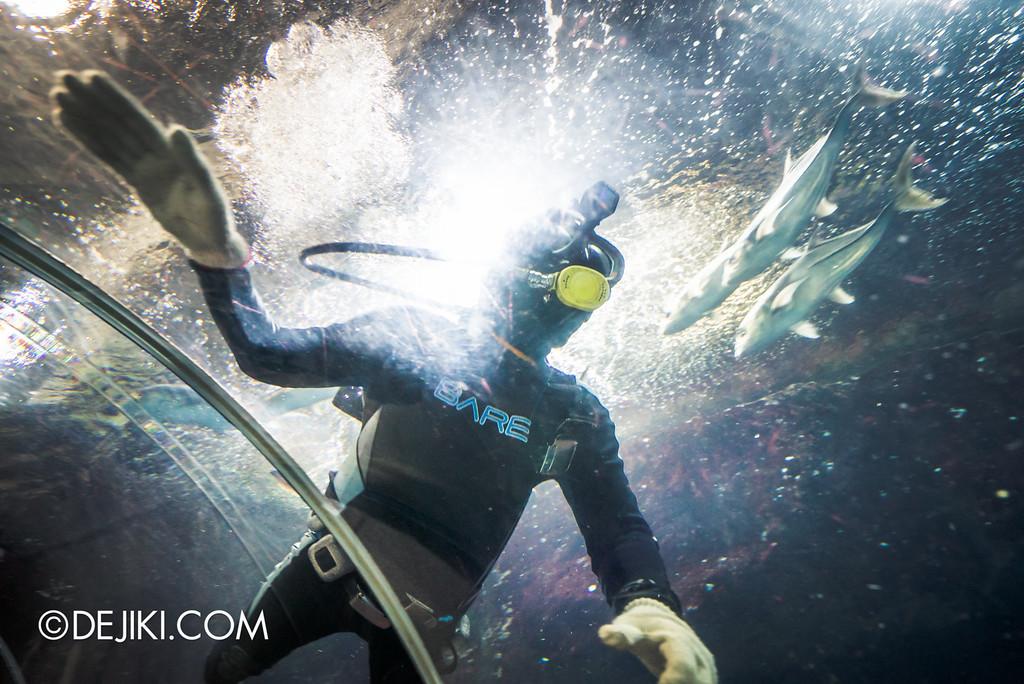 Underwater World Singapore - Diver