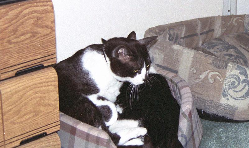 2003 12 - Cats 07.jpg