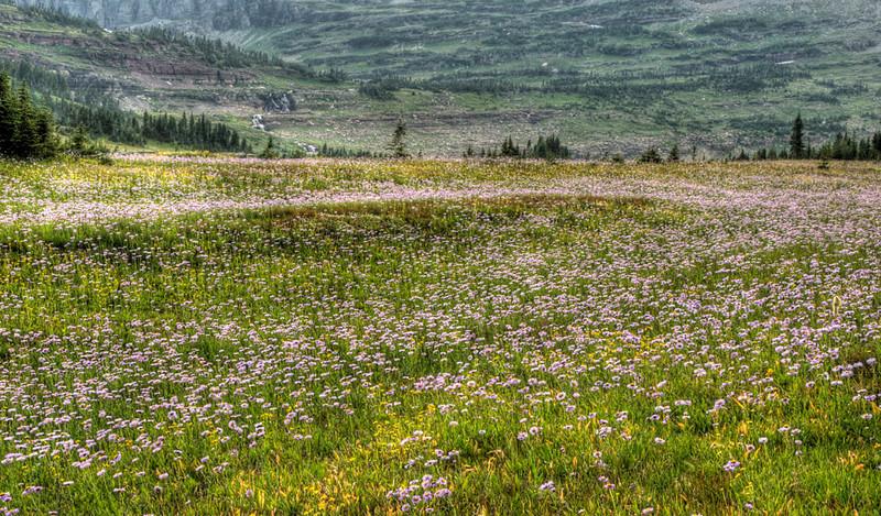 glacier_logan_pass_17749_meadowlands-sm.jpg