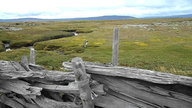 Patagonia - Ben Horne '58