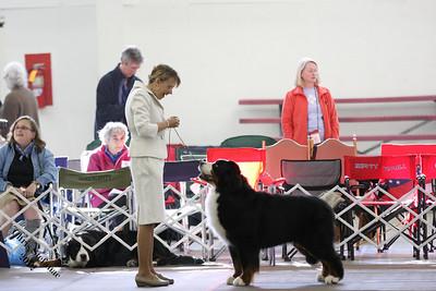 BMDCA 2012 Veterans 7-9 yr Dog