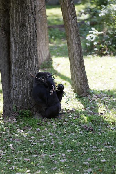 2015_08_20 Kansas City Zoo 042.jpg