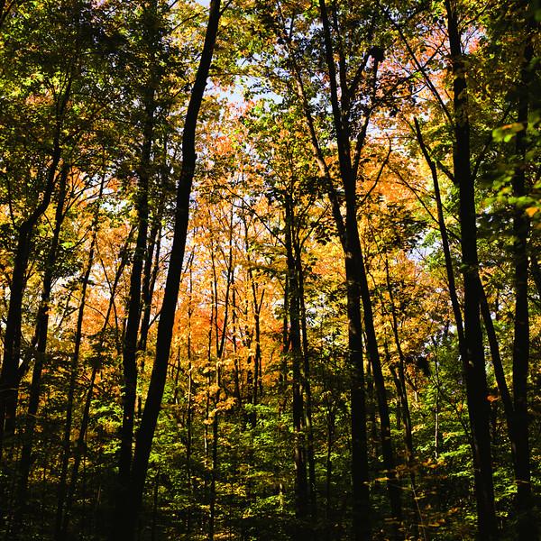 Autumn Hike 120 Film-00028.jpg