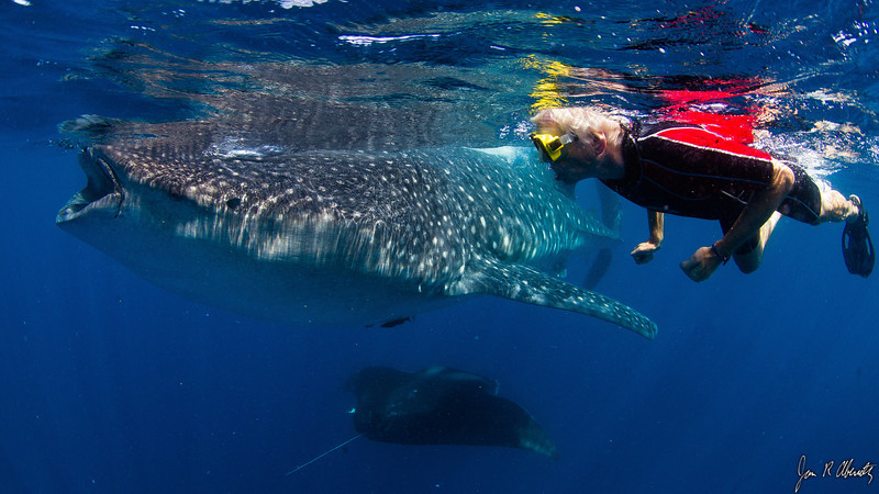 Jim Abernethy photo:  Peter swimming with the shark and a manta ray.