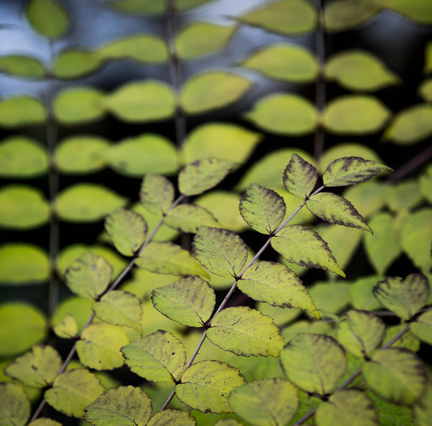 zoo-1669.jpg