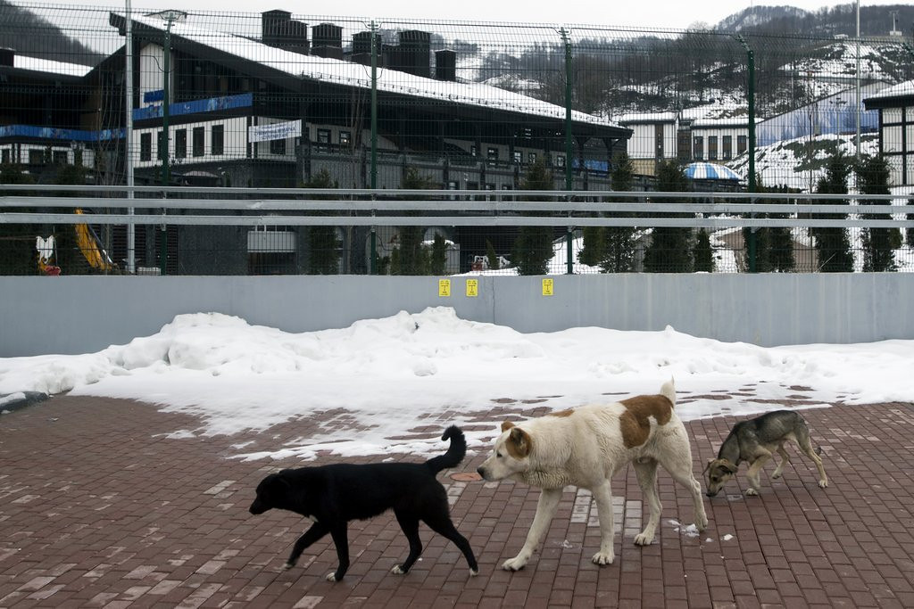 ". <p>4. SOCHI OLYMPICS <p>They�ll be ready for Games, just as soon as they kill a few hundred stray dogs. (unranked) <p><b><a href=\'http://www.foxnews.com/world/2014/02/02/sochi-organizers-say-three-hotels-not-ready-for-media/\' target=""_blank\""> HUH?</a></b> <p>    (AP Photo/Pavel Golovkin)"