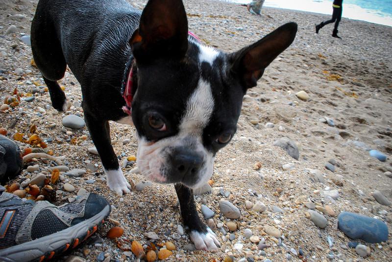 dogs_beach-046.jpg