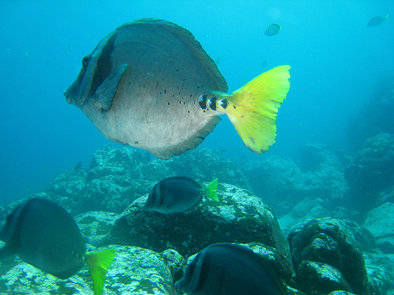 Diving in the Galapagos (385 of 392)