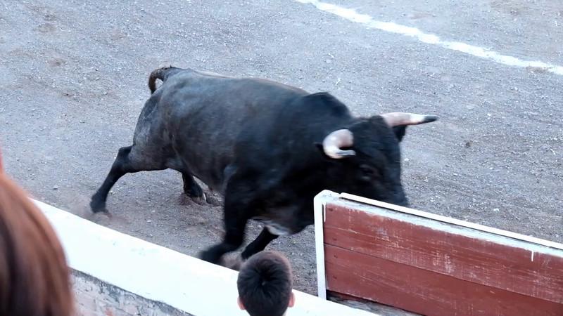 Bullfight Montage