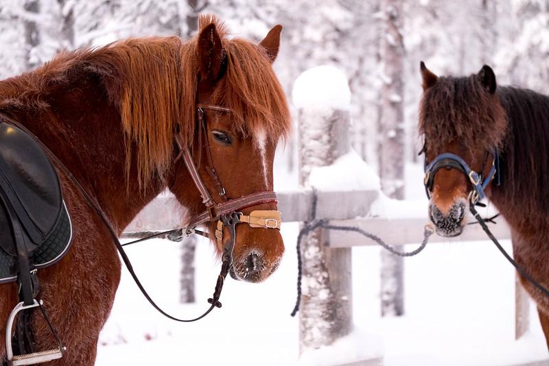 Finland_160117_102.jpg