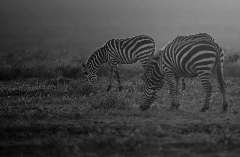 Tanzania_Feb_2018-310.jpg