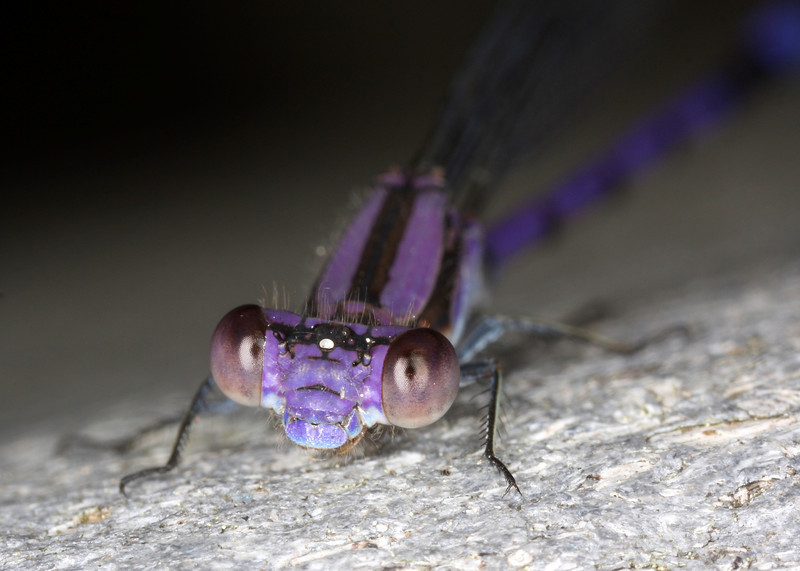 A trip to the Quogue Wildlife Refuge with my macro lens.