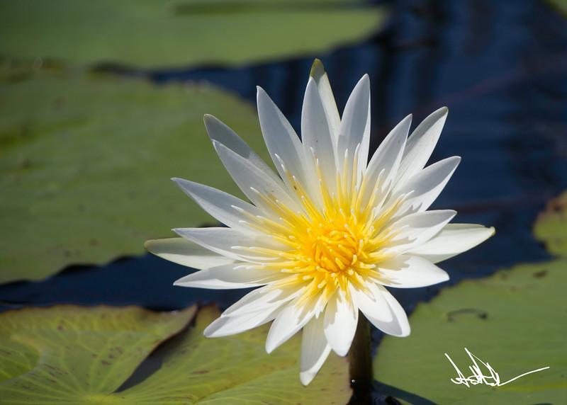 Flowers-1-7.jpg