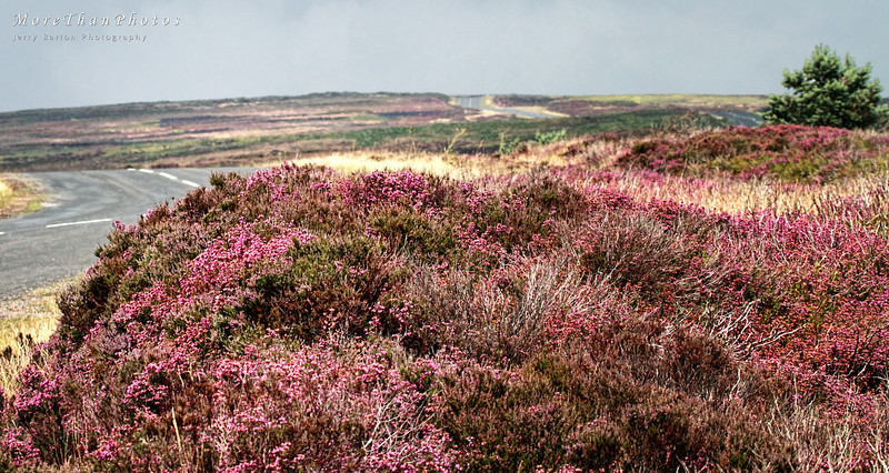 """H"" is for Heather, high on the hill