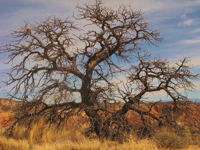New Mexico_IMG_2119.jpg