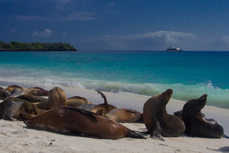 beach with sea lions 3.jpg