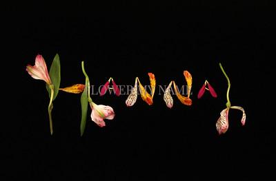 #1 Hannah in Lillies