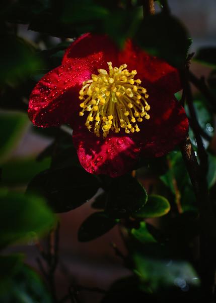 Christmas flower 113014--2.jpg