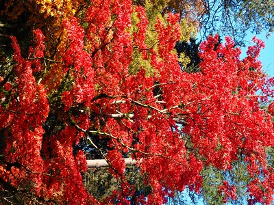 Japanese Gardens, 10-16