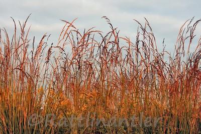 Wildflowers and Prairie Plants