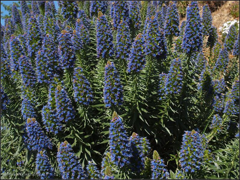 topanga flowers 2010 05.jpg